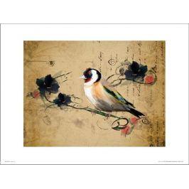 Birds Vintage - plakat premium