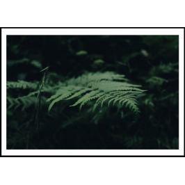 Leśna paproć - plakat