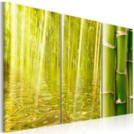 Obraz - Bambus w tafli wody