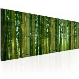 Obraz - Bambusy w blasku słońca