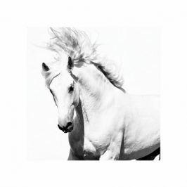 Arabski Koń - plakat premium