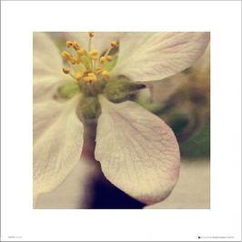 Apple Blossom Close Up - plakat premium