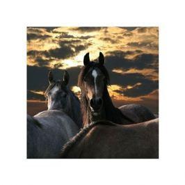 Konie - plakat premium