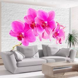 Fototapeta - Różowe pobudzenie
