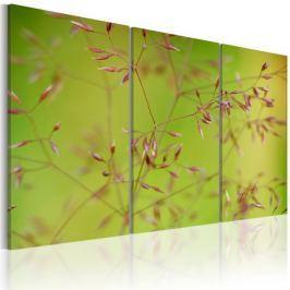 Obraz - Drobniutkie kwiatuszki