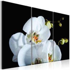 Obraz - Śnieżnobiała orchidea