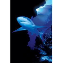 Rekin - plakat