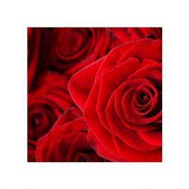Czerwone róże - plakat premium