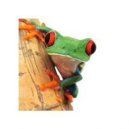 Żabka - zbliżenie - plakat premium