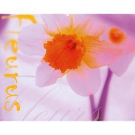 Krokus - Kwiat - plakat