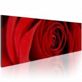 Obraz - Róża północy