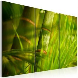 Obraz - Soczysta zieleń tropikalnych traw