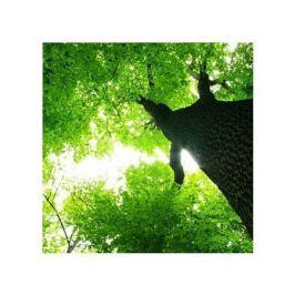 Gigatyczne Drzewo - plakat premium