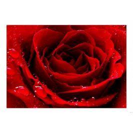 Czerwona róża - plakat