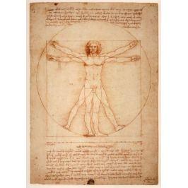 Anatomia Leonardo da Vinci - plakat