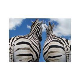 Zebry - Miłość - plakat premium