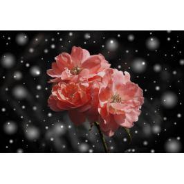 Przekwitające róże  - plakat Fototapety