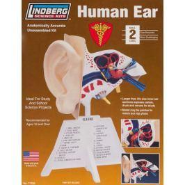 Model plastikowy Lindberg - Ludzkie ucho Pozostałe zabawki edukacyjne