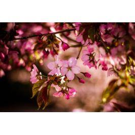 Wiosna w ogrodzie - plakat Fototapety