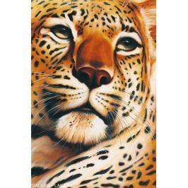 Gepard - Leopard - plakat Fototapety