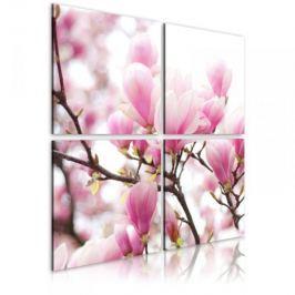 Obraz - Kwitnące drzewo magnolii Fototapety