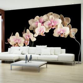 Fototapeta - Kwitnąca orchidea Fototapety