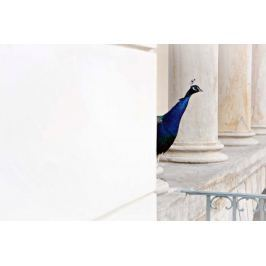 Pawie Oko - plakat premium