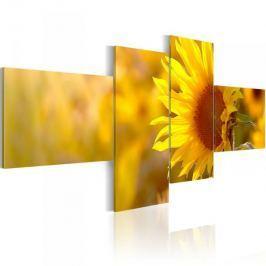 Obraz - Słoneczne słoneczniki Fototapety