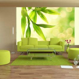 Fototapeta - Zielone liście bambusa Fototapety