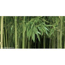 Las Bambusowy - plakat premium