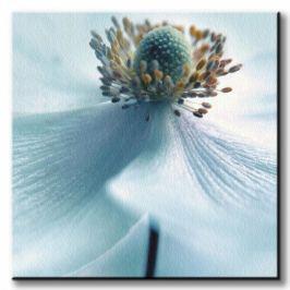 Japanese Anemone - Obraz na płótnie