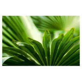 Liść palmowy - plakat