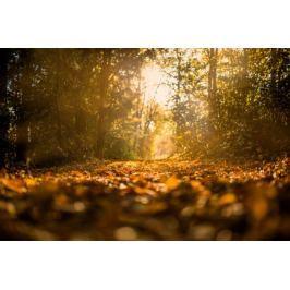 Ścieżka w lesie - plakat