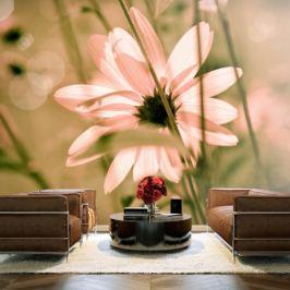 Fototapeta - Summer flower
