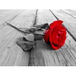 Czerwona Róża na deskach pomostu - plakat