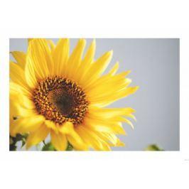 Słonecznik - plakat