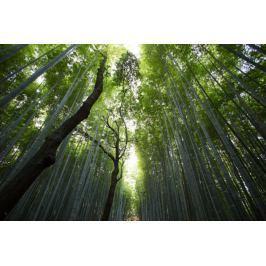 Las bambusowy - plakat