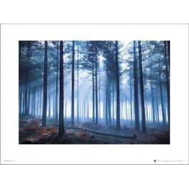 Tom Mackie Forest - plakat premium