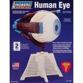 Model plastikowy Lindberg - Ludzkie oko