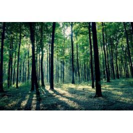 Złoty potok las - plakat premium