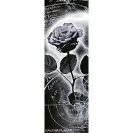 Srebrna Róża - plakat