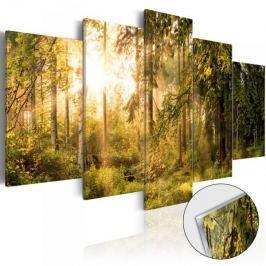 Obraz na szkle akrylowym - Magia lasu [Glass]
