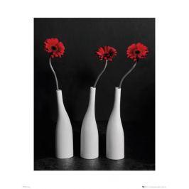 Gerbera w Białych wazonach - plakat