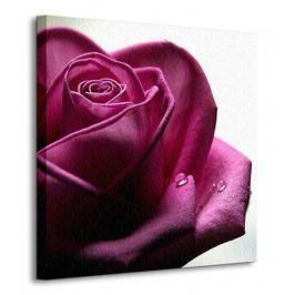 Smutna Róża - Obraz na płótnie