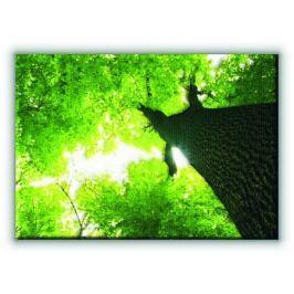 Gigantyczne Drzewo - Obraz na płótnie