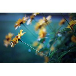 Żółte kwiaty na niebieskim tle - plakat premium