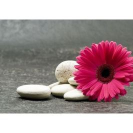 Gerbera pink - fototapeta
