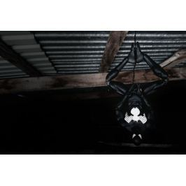 Black Spider-Man - plakat