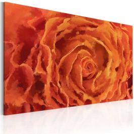 Obraz - Róża w oranżu