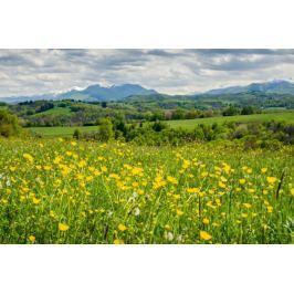 Łąka pełna kwiatów Pireneje - plakat premium
